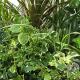 イベント「観葉植物 saxia「サクシア」プランツパズル植物長持ち体験モニター!」の画像