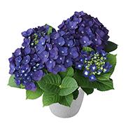 「【アジサイ ディープパープル】saxia(サクシア)植物長持ち体験モニター!」の画像、株式会社ハクサンのモニター・サンプル企画