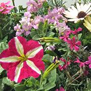 「季節のお花 saxia「サクシア」プランツパズル植物長持ち体験モニター!」の画像、株式会社ハクサンのモニター・サンプル企画