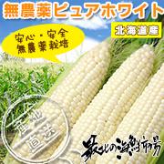 こだわりの無農薬栽培『ピュアホワイト』生でかぶりついてください