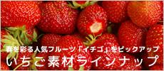 イチゴ素材 高品質イチゴ果汁粉末 KUKKU
