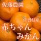 イベント「【5名様限定】佐藤農場 無農薬『赤ちゃんミカン 小玉3kg』モニタープレゼント」の画像