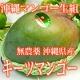 イベント「【3名様限定】沖縄マンゴー生産研究会 幻の大玉無農薬マンゴーモニタープレゼント」の画像