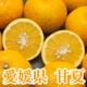 【3名様限定】愛媛県 自然栽培無農薬『甘夏 B品5kg』モニタープレゼント