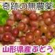 イベント「【3名様限定】稲泉農園 奇跡の無農薬ぶどうセット モニタープレゼント」の画像