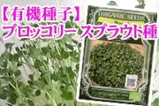 【有機種子】スプラウト種「ブロッコリー」3.0g