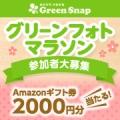 Amazonギフト券2000円分が当たる!『グリーンフォトマラソン』参加者大募集/モニター・サンプル企画
