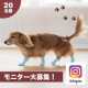 イベント「愛犬に肉球保護するブーツを履かせて、映え写真を撮ろう!」の画像