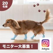 愛犬に肉球保護するブーツを履かせて、映え写真を撮ろう!