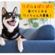イベント「【アレルギー配慮のお魚ドッグフード】愛犬の可愛い写真投稿でさらに商品ゲット!」の画像