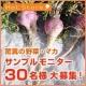 イベント「《サンプルモニター大募集》マカ5日分を30名様に!」の画像