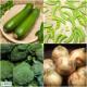 イベント「沖縄県産の無農薬野菜 詰め合わせボックス (大宜味農場)自然農法【5名様】」の画像