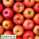青森県の特別栽培りんご『サンふじ』ご試食モニター募集!【6名様】