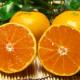 佐賀県の有機JAS無農薬柑橘『温州みかん』ご試食モニター募集!【5名様】