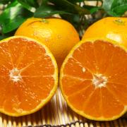 「佐賀県の有機JAS無農薬柑橘『温州みかん』ご試食モニター募集!【5名様】」の画像、ふるさと21株式会社のモニター・サンプル企画