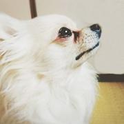 【涙やけにビオワンファイン】5つの有効成分を贅沢凝縮★動物看護士開発の愛犬サプリ