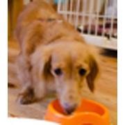 【カンタン応募】『ペットの贅沢水素水』動物看護士が監修!犬猫専用高濃度水素水