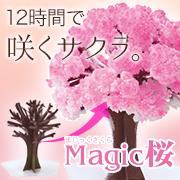「あなたにはどんな幸せが訪れる?! 12時間で咲く桜を育てて幸せエピソードを大募集」の画像、株式会社OTOGINOのモニター・サンプル企画