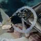 イベント「天然石ムーンストーン ブレスレットのブログorインスタ投稿モニター10名様募集!」の画像