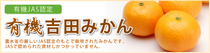 愛媛 吉田みかんの産直店 なかい