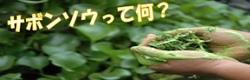 サボンソウ~理想の洗浄成分~