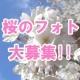 イベント「桜の写真を大募集!! ~みんなで全国の桜フォトを集めよう~」の画像
