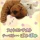 イベント「【ぽかぽかの春!】ワンちゃんネコちゃん★フォトコンテスト【プレゼントあり♪】」の画像