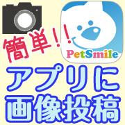 「ペット専用SNSアプリに写真を投稿するだけ!クオカード10名様にプレゼント♪」の画像、株式会社コジマのモニター・サンプル企画