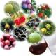 イベント「【うるおいの里】(発売前)話題の「酵素ダイエット」、おいしく始めてみませんか?」の画像