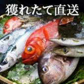 〜三崎直送〜選べる鮮魚詰め合わせセット