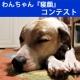 第二弾!おもちゃの除菌、年末のお掃除に大活躍☆【超電水クリーンシュ!シュ!】
