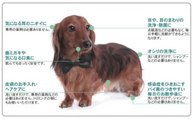 ペットのオゾンシャワー・オゾン水で皮脂改善