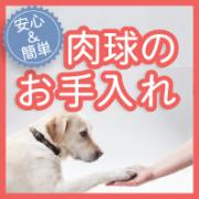 「【犬モデル募集】ワンちゃんの飼い主さん必見!マイナスイオン水で肉球お手入れ♪」の画像、株式会社ラクピュアのモニター・サンプル企画