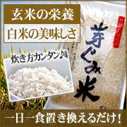 おいしいお米 芽ぐみ米