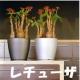 イベント「【5月限定】花や緑の画像大募集~ドイツ底面かん水プランターレチューザプレゼント~」の画像
