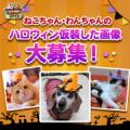 【猫犬飼い主さま限定企画】ねこちゃん・わんちゃんも一緒にハロウィンを楽しもう♪/モニター・サンプル企画