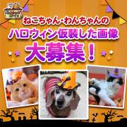 「【猫犬飼い主さま限定企画】ねこちゃん・わんちゃんも一緒にハロウィンを楽しもう♪」の画像、マルトモ株式会社のモニター・サンプル企画