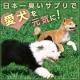 【日本一臭いサプリで日本中の愛犬を元気にするキャンペーン!】50名様!/モニター・サンプル企画