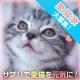 ★ブログ投稿なし★「愛する猫ちゃんを元気にしたい方、大募集!」/モニター・サンプル企画