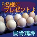 【松本ファーム】 産卵数が少なく高価で貴重な烏骨鶏の卵 <モニター募集♪♪>/モニター・サンプル企画