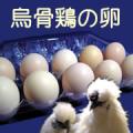 烏骨鶏の卵 10個入りのブログモニター5名様募集!/モニター・サンプル企画