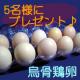 【松本ファーム】 産卵数が少なく高価で貴重な烏骨鶏の卵 <モニター募集♪♪>
