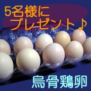 「【松本ファーム】 産卵数が少なく高価で貴重な烏骨鶏の卵 <モニター募集♪♪>」の画像、有限会社松本ファームのモニター・サンプル企画
