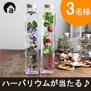 【アンジェ】人気のハーバリウム「秋の新作」プレゼント♪