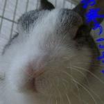 ミミらんのシッポさんのプロフィール画像