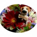 miyumiyuさんのプロフィール画像