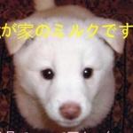 リリーさんのプロフィール画像