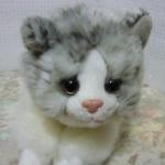 チロちゃんさんのプロフィール画像