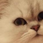 手毬ねこさんのプロフィール画像