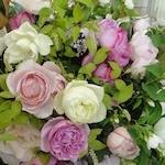 Roseさんのプロフィール画像